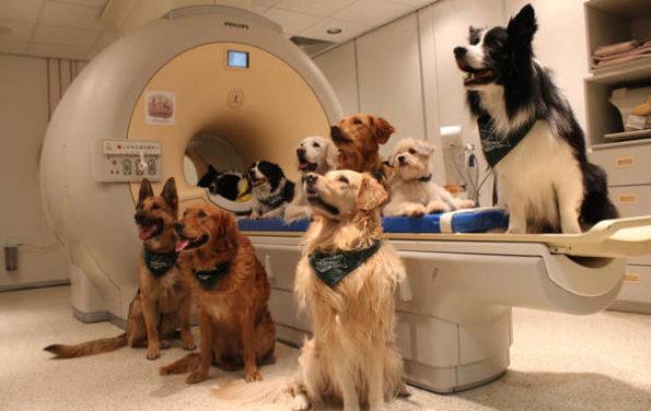 Cinque geni fanno del cane il miglior amico dell'uomo