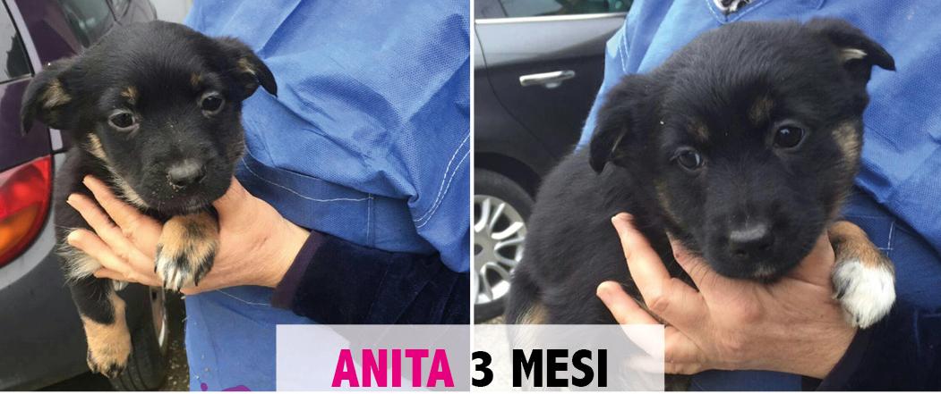 ANITA, CUCCIOLA DI 3,9 Kg