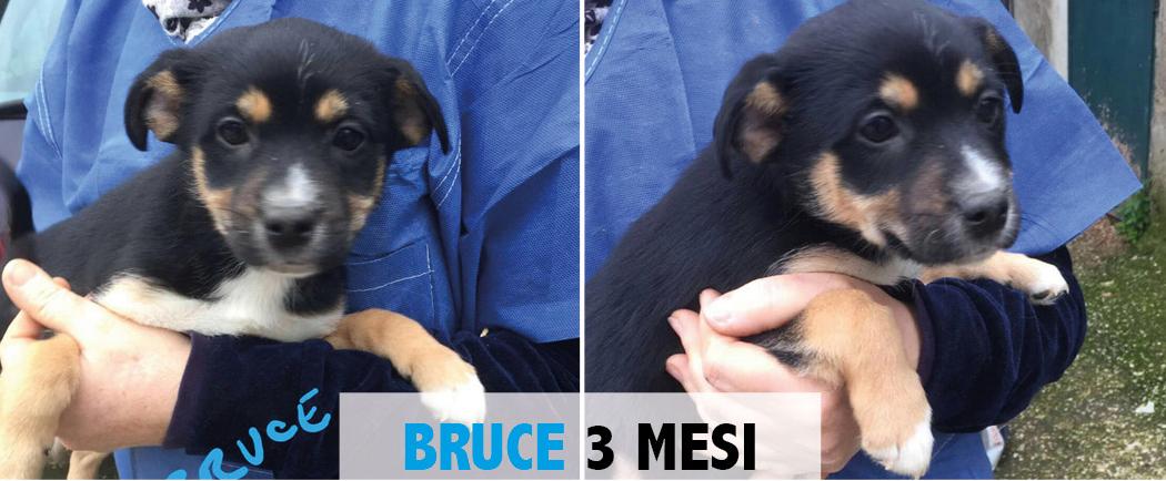BRUCE, CUCCIOLO DI 3,9 Kg