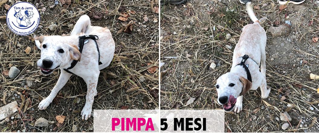 PIMPA, cucciolotta allegra cerca casa