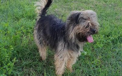 FILIPPO… Cairn Terrier