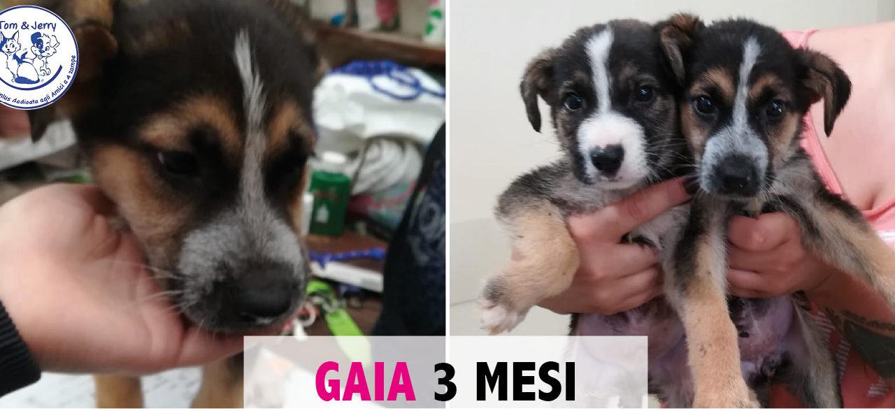 GAIA CUCCIOLA 3 MESI