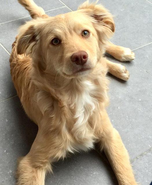 SETH cucciolo meraviglioso dagli occhi verdi