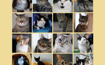 Gatti e gattine