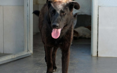 EMY da cane di casa al canile