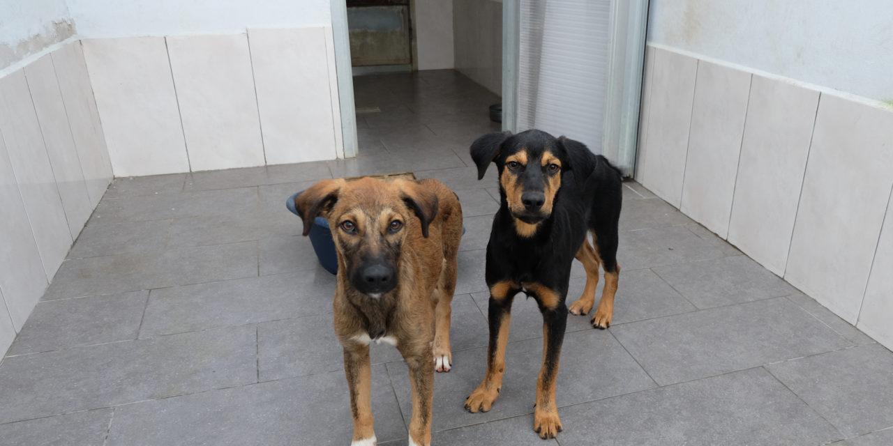 BIRRA e BRUNO cuccioli esuberanti