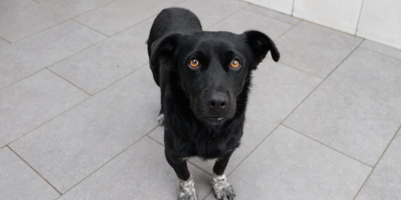 BLACK dolcissimo cagnolino