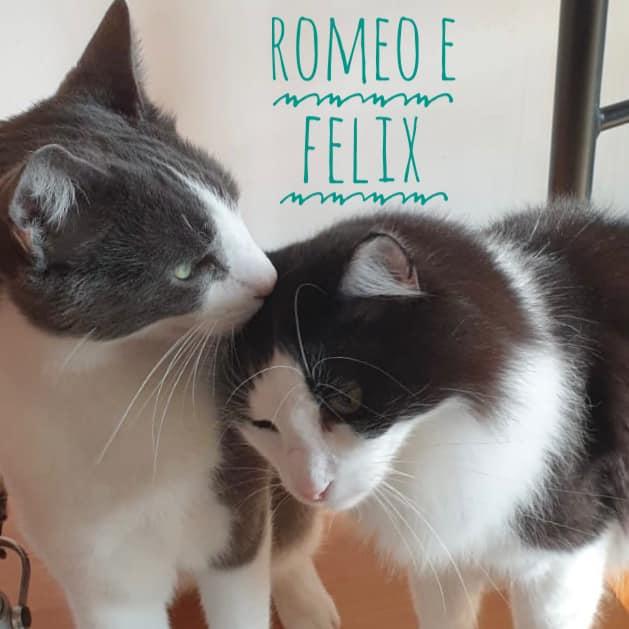ROMEO E FELIX